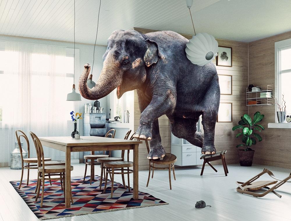 Tiere in der Wohnung